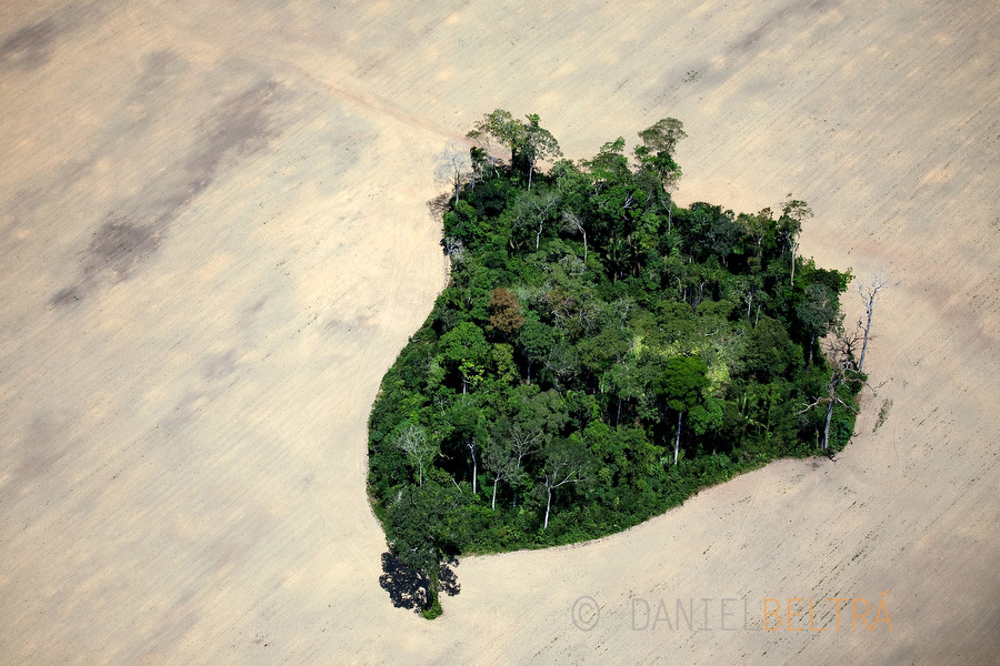 Spared patch of rainforest surrounded by soy fields south of Itaituba, Para State, Brazil.