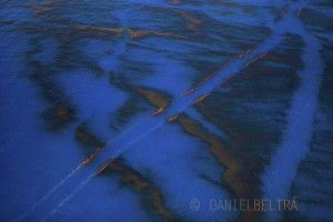 Paths of oil-free water remain in the calm waters of the Gulf of Mexico from boats attempting to clean up the crude spill off the coast of Louisiana.