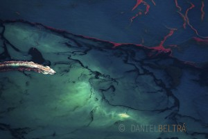 A ship motors through oil spilled in the Gulf of Mexico from. The spill caused extensive damage to the marine and wildlife habitats as well as the Gulf's fishing and tourism industries.