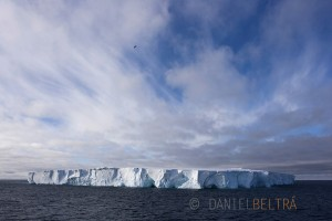 A bird flies past a tabular iceberg in the Ross Sea