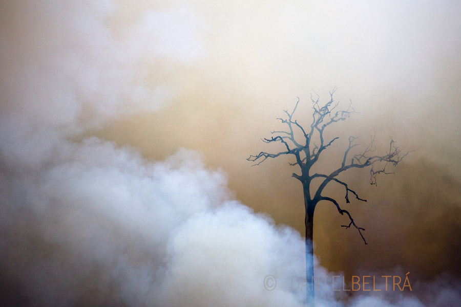 Smoke reveals a single tree as a fire burns the Amazon rainforest, clearing the way for cattle or crop farming in Sao Felix Do Xingu municipality, in Para State, Brazil.
