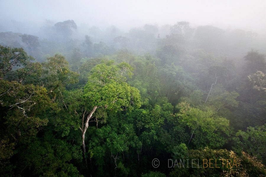 Rainforest in the morning mist. Cristalino State Park, Alta Floresta, Mato Grosso, Brazil.