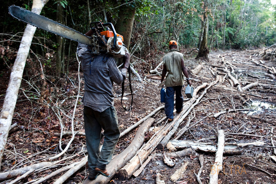 Men carrying a chainsaw and gasoline further into the rainforest at an illegal logging camp on the Lukenie River near Bisenge, Democratic Republic of Congo.