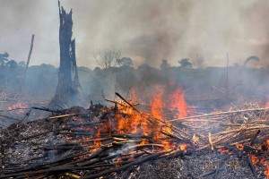 Piles of slash are burned to clear the rainforest land for agricultural production at Onane, Democratic Republic of Congo.
