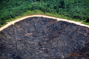 A logging road bisects rainforest land that has been cleared and burned from land that hasn't near Jambi, Indonesia.