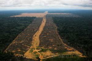 1645 hectares of the Gleba do Pacoval illegally logged to plant soy. Santarem, Para State, Brazil.