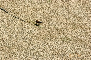 A horse walks across the  lake is almost completely dry during one of the worst droughts ever recorded in the Amazon region, 2005. Para State, Brazil.