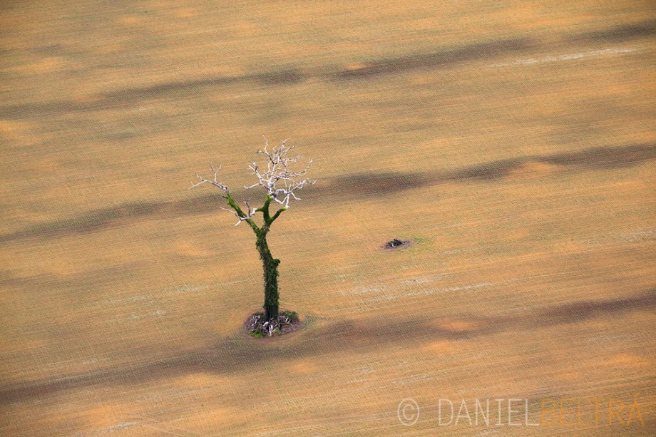 Tree in soy field south of Santarem near the BR-163 road.